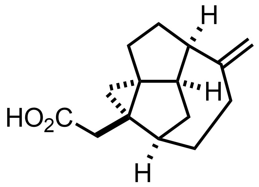 Echinopine A structure