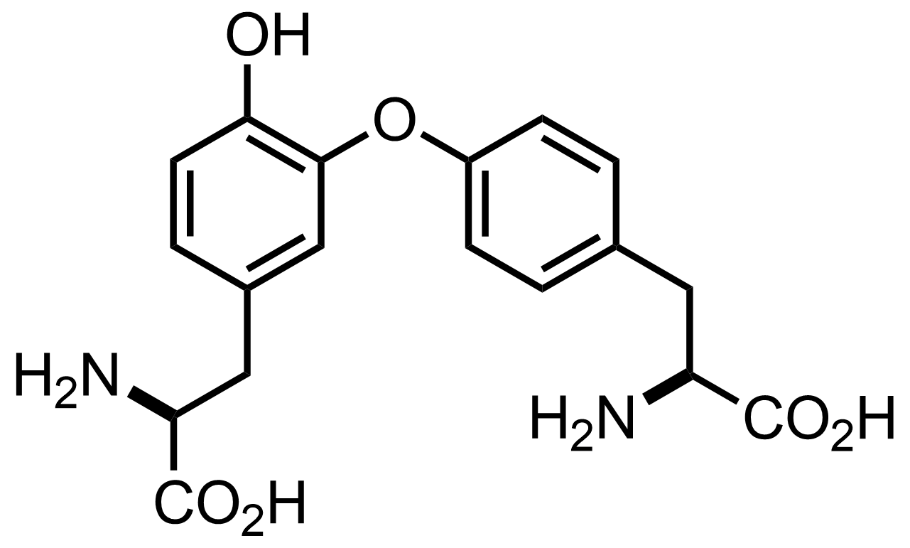 Structure of Isodityrosine