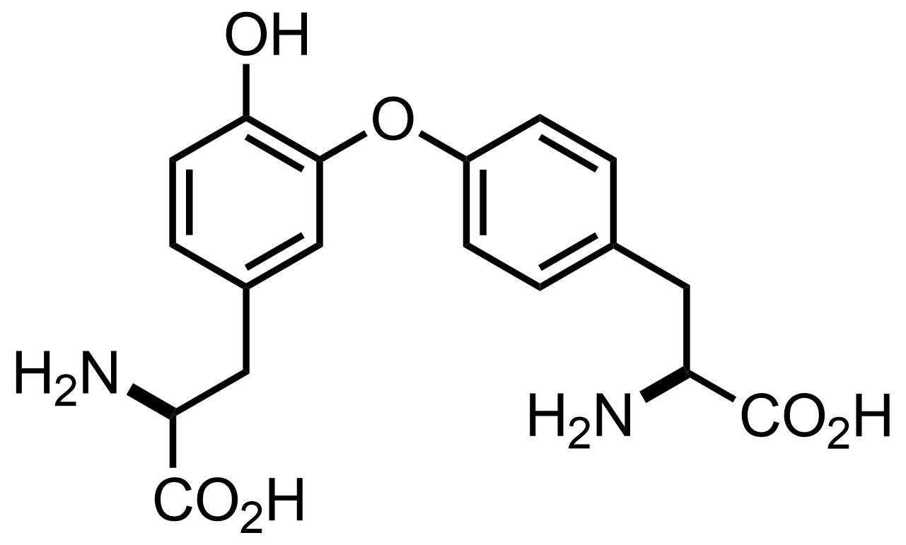 Structure of Isodityrosine