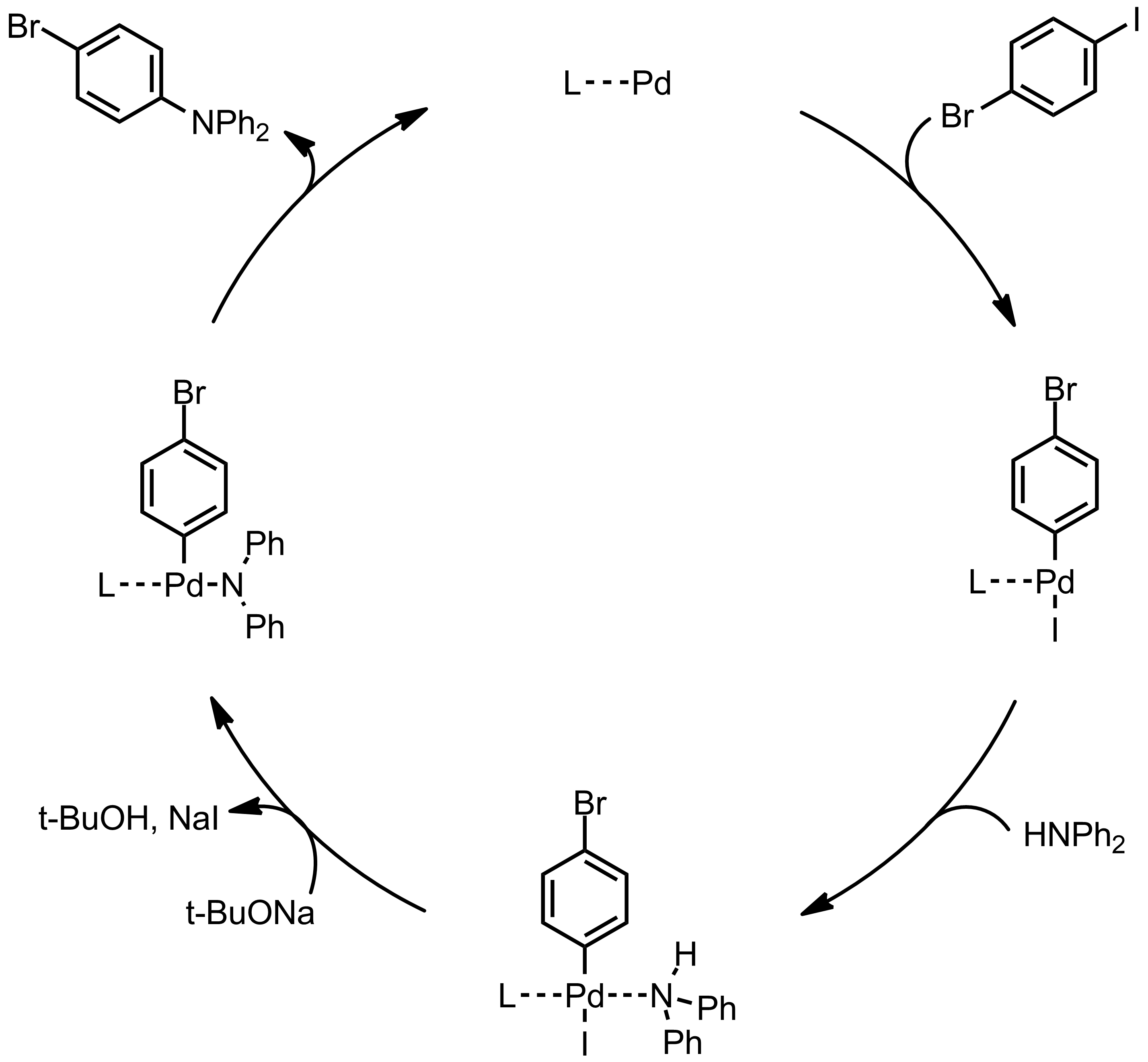Mechanism of the Buchwald-Hartwig Coupling