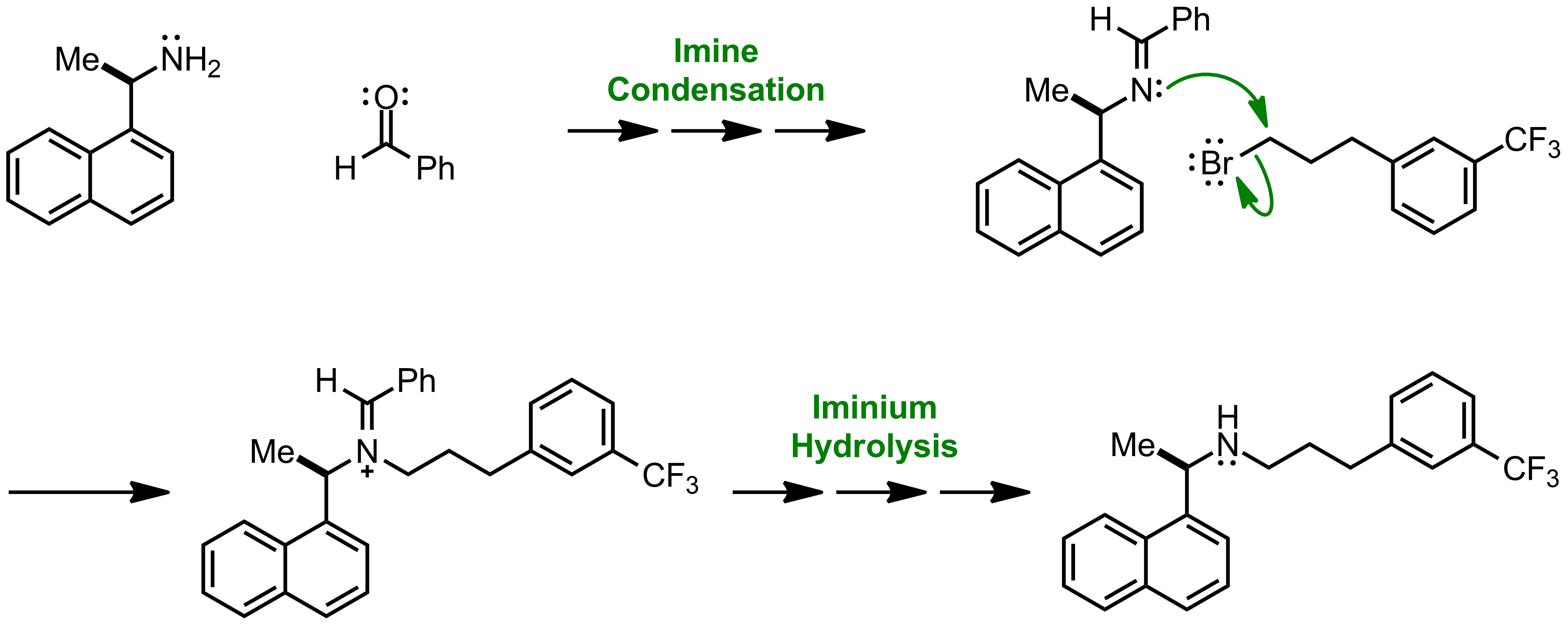 Mechanism of the Forster-Decker Amine Synthesis