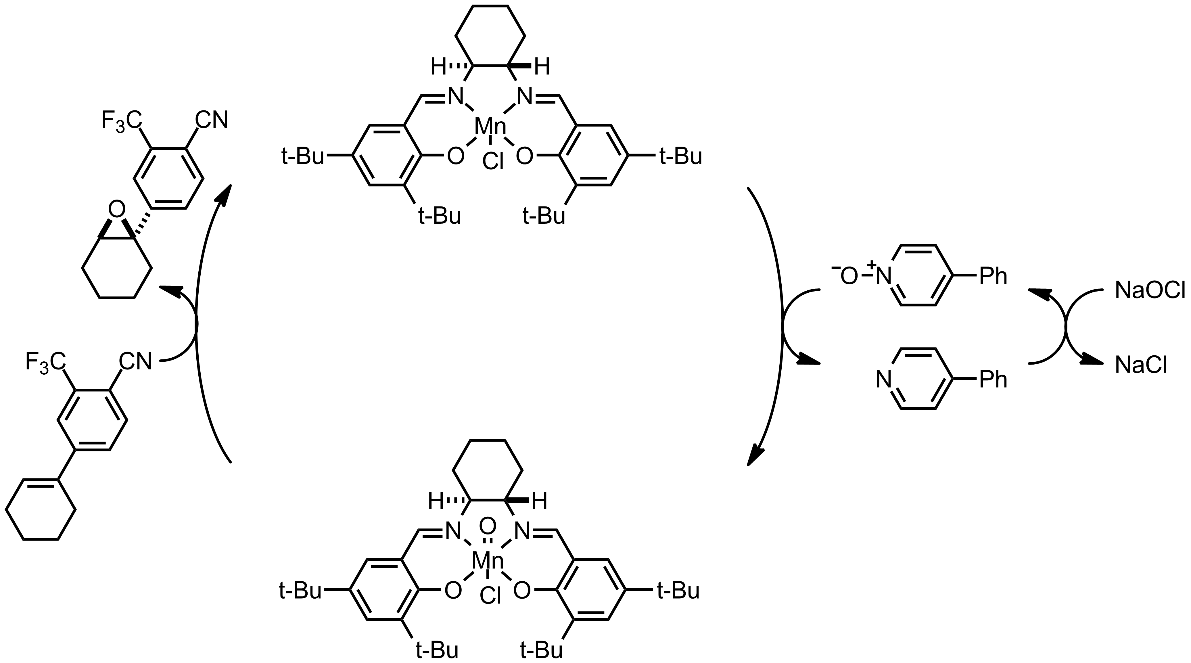 Mechanism of the Jacobsen-Katsuki Asymmetric Epoxidation