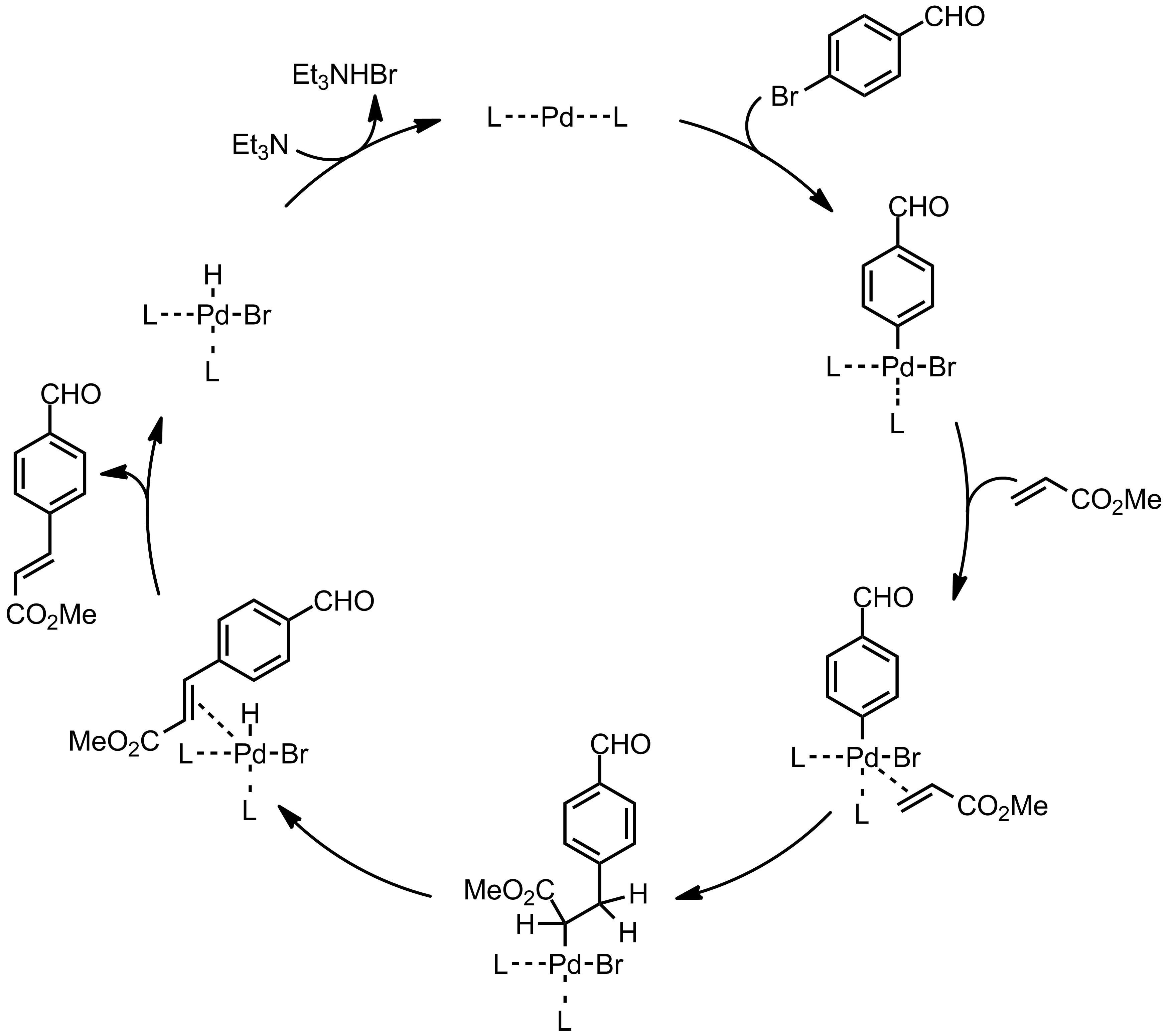Mechanism of the Mizoroki-Heck Reaction