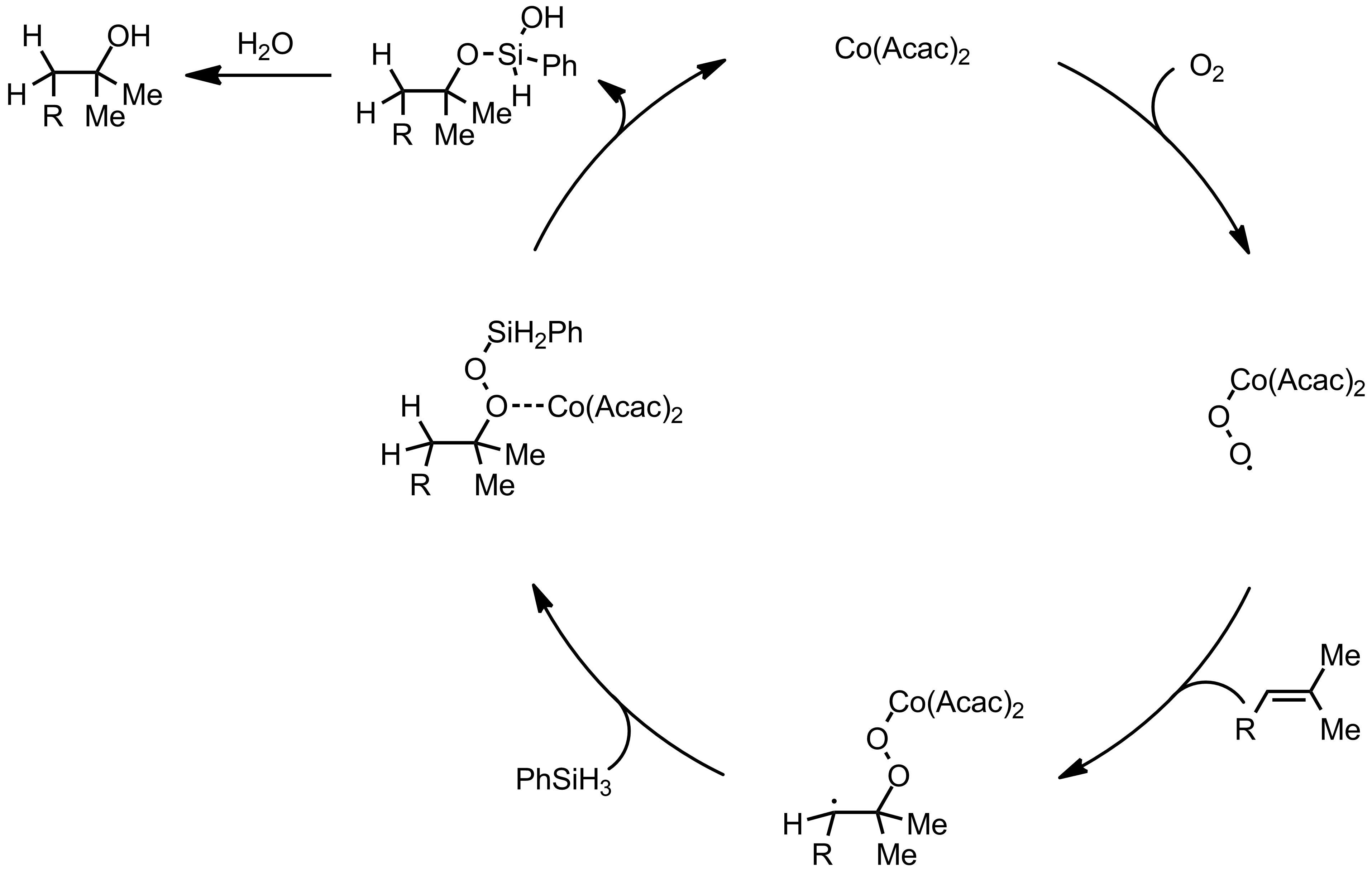 Mechanism of the Mukaiyama Hydration