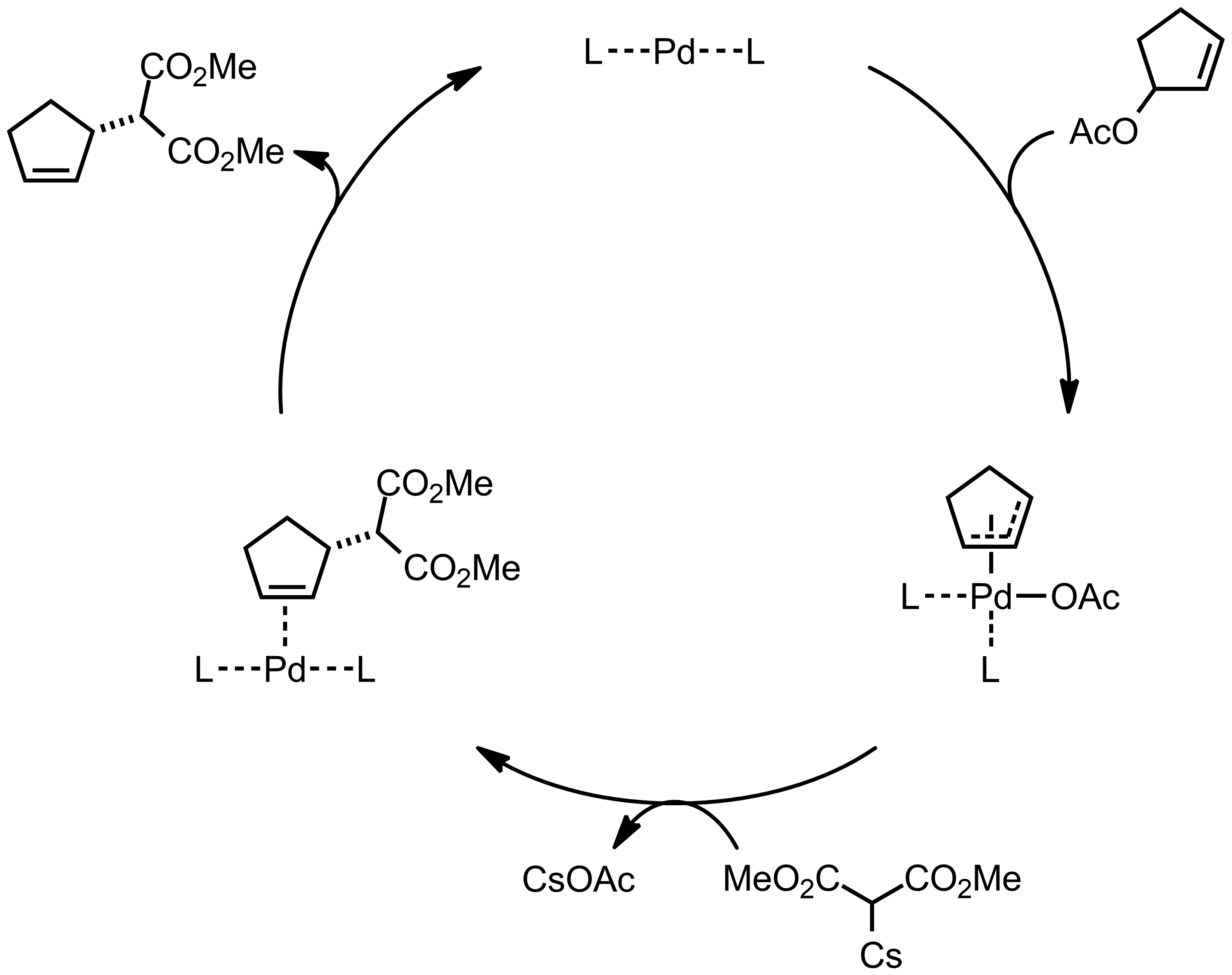 Mechanism of the Trost Asymmetic Allylation Alkylation