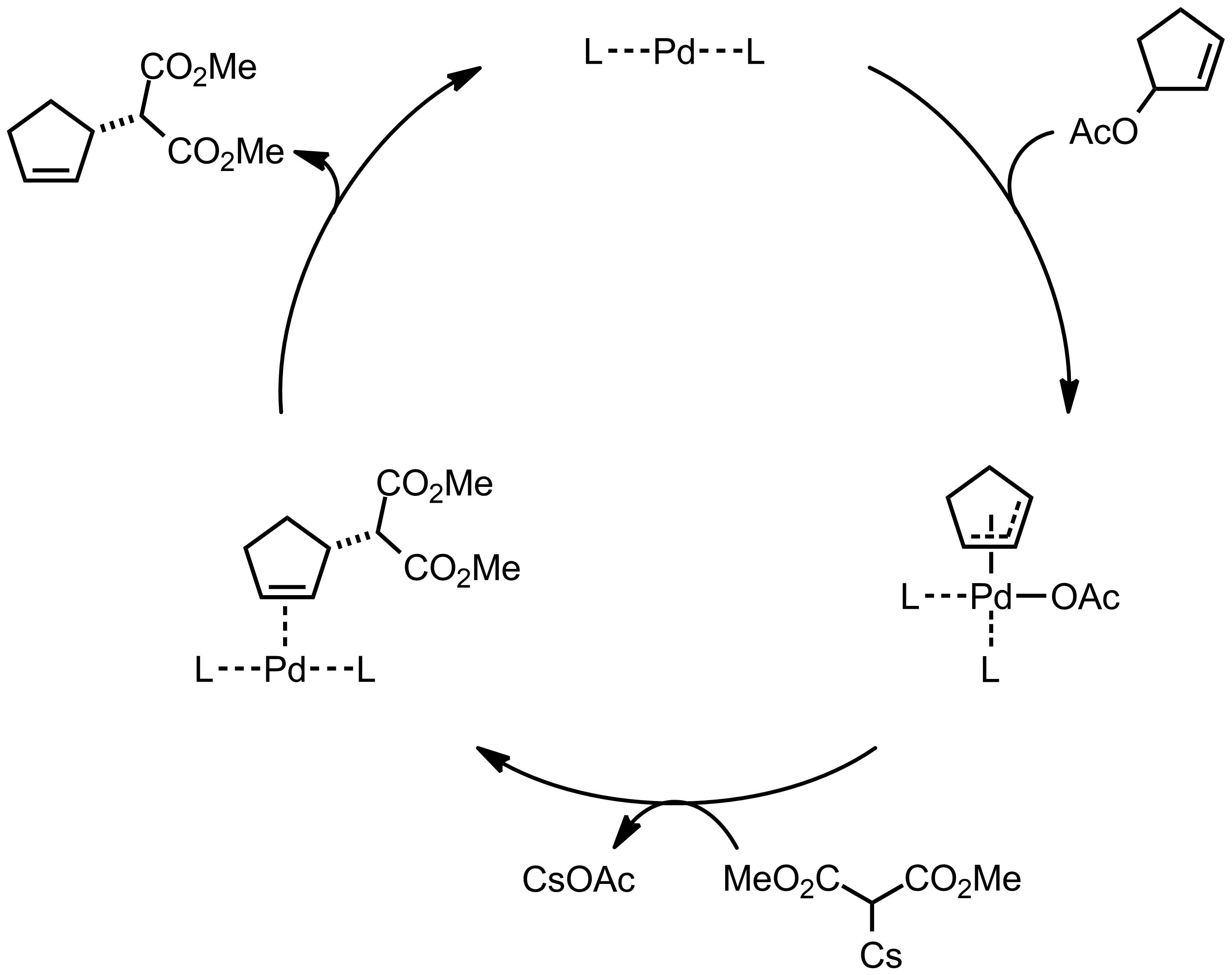 Mechanism of the Trost Asymmetic Allylation Alkylation