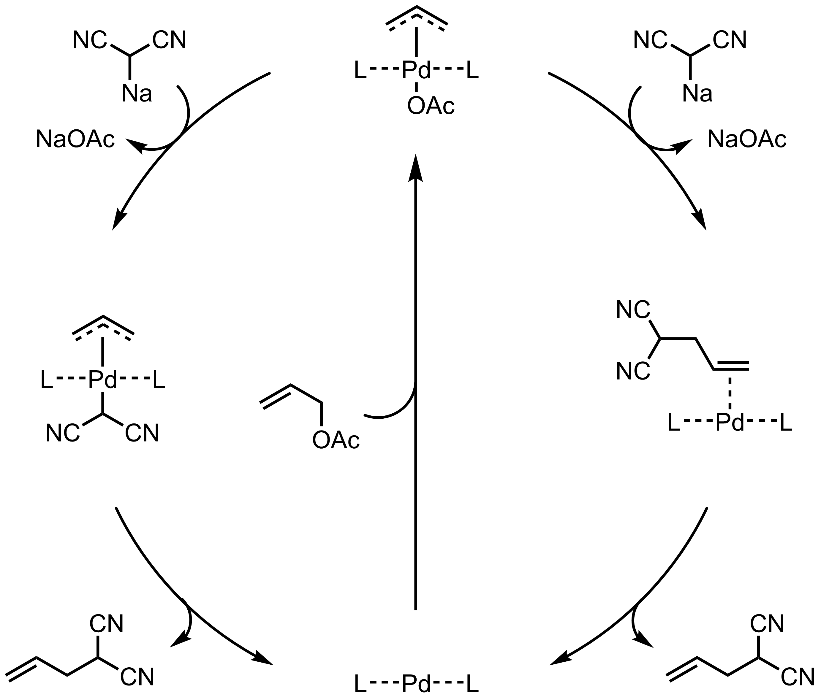 Mechanism of the Tsuji-Trost Reaction