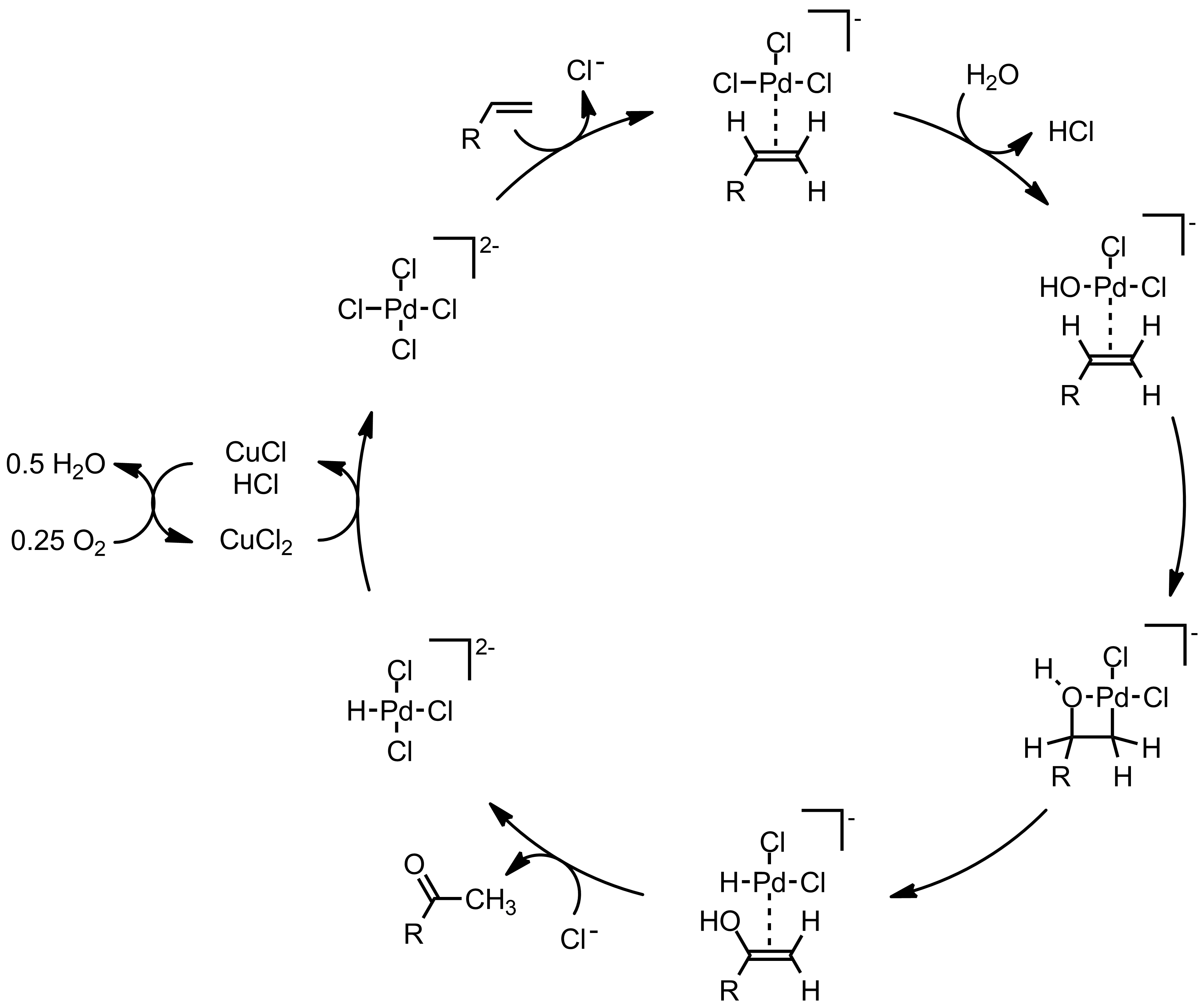 Mechanism of the Wacker Oxidation