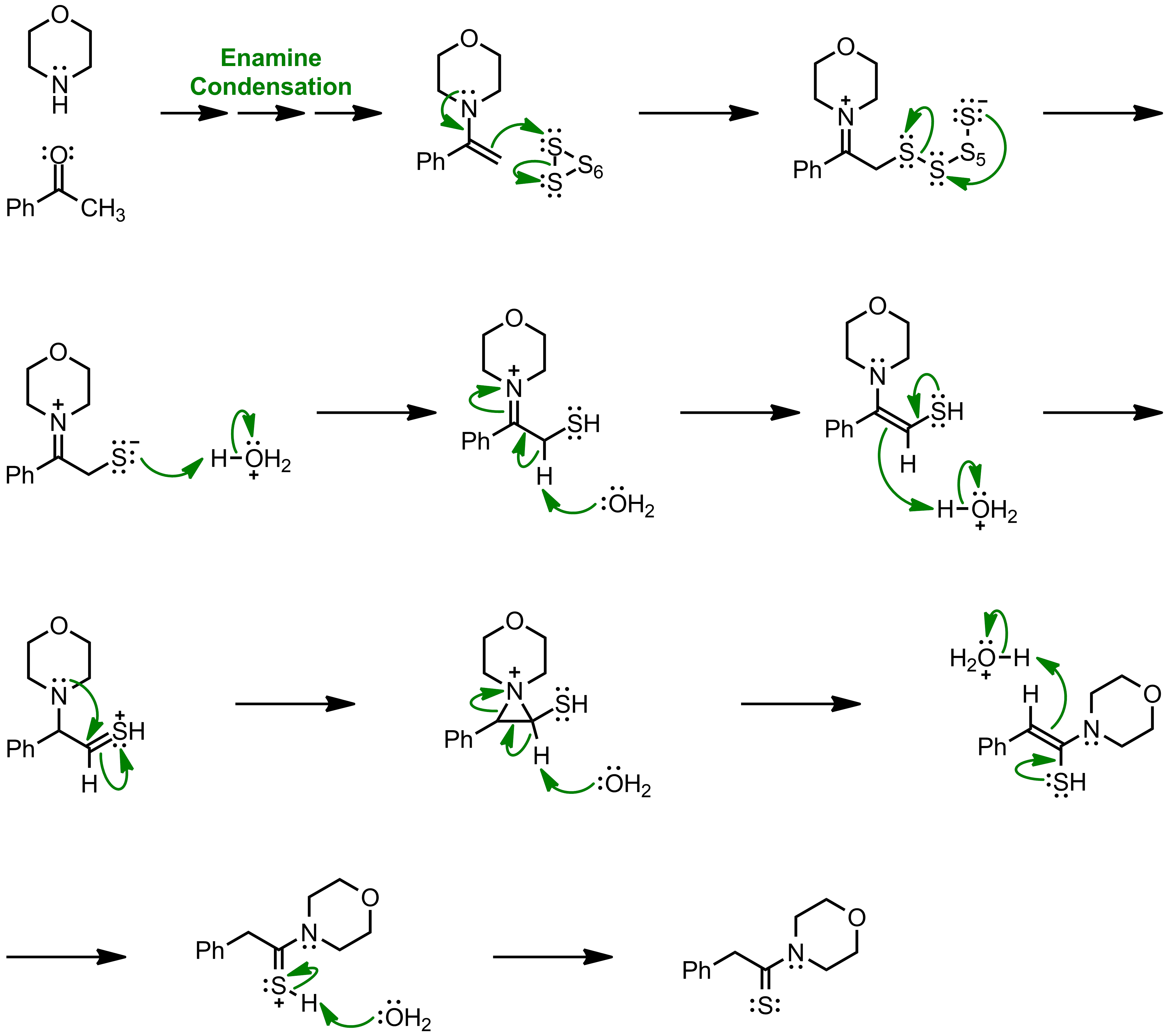Mechanism of the Willgerodt-Kindler Reaction