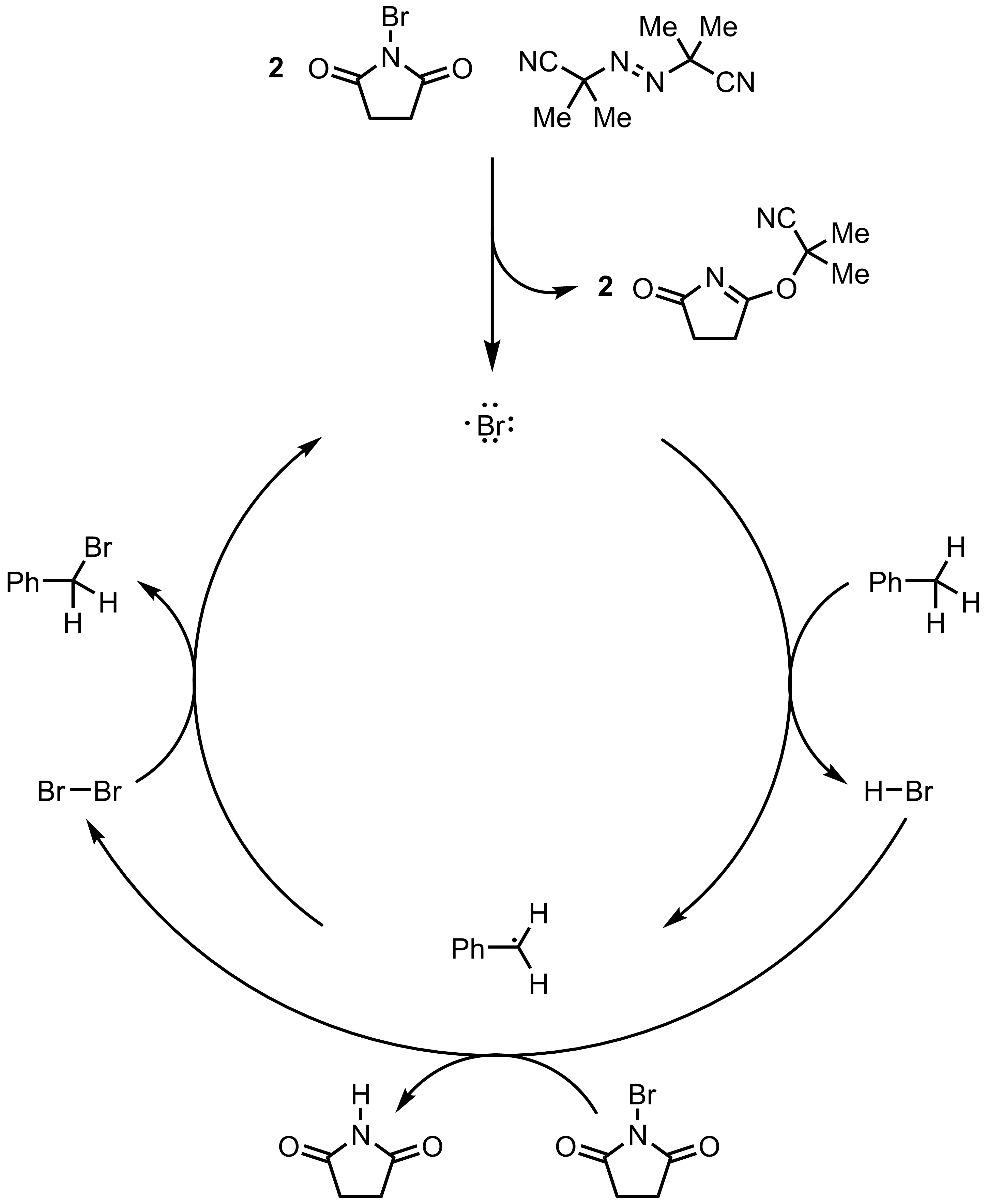 Mechanism of the Wohl-Ziegler Reaction