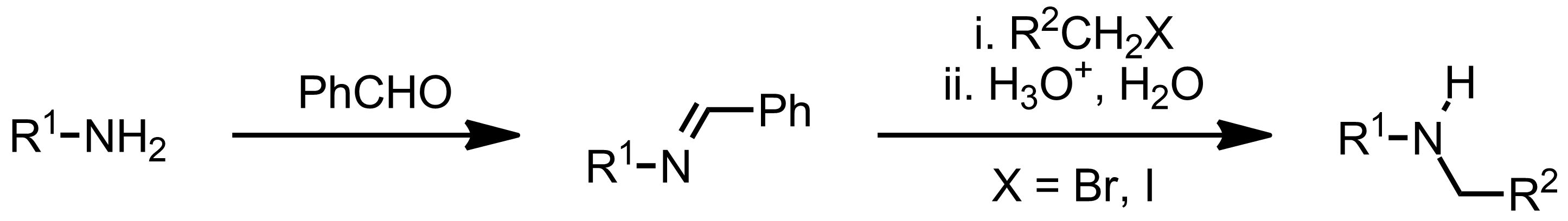 Schematic representation of the Forster-Decker Amine Synthesis.